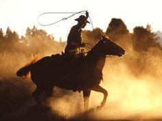 Horse Wallpaper Desktop Background (4)