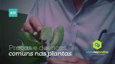 Pragas e doenças comuns nas plantas #15