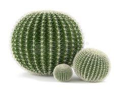 cactus, globo, render Cacti And Succulents, Planting Succulents, Cactus Plants, Succulent Hanging Planter, Hanging Plants, Landscape Diagram, Landscape Design, Photoshop, Round Cactus