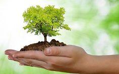 curso ambiental online com certificado