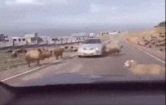 Oops! Excuse me!