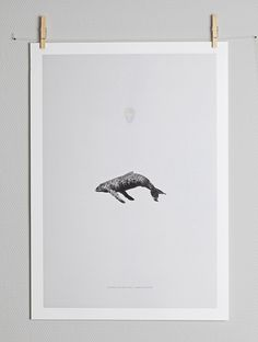 Image of WHALE REPRISE BY GREG EASON