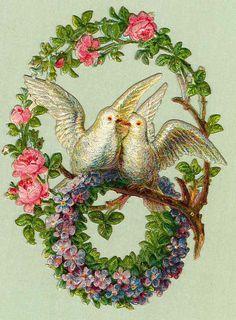~doves--so charming