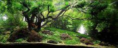Aquário plantado belíssimo para você se inspirar e montar o seu! #aquapaisagismo