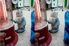 【衝撃】 ストーブの前で実に人間くさい猫がtwitter上に投稿されるwww