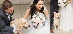Adorable dog on wedding day Autumn Silva Photography Milwaukee Wedding
