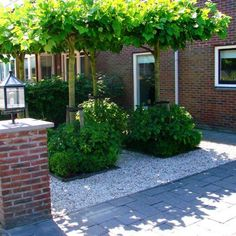 Tuin met weinig onderhoud Dream Garden, Home And Garden, Outdoor Garden Rooms, Pebble Garden, Privacy Plants, Fast Growing Trees, Garden Entrance, Contemporary Garden, Architecture Design