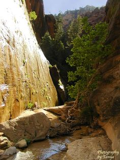 Zion National Park Pictures / zion-mystery-zc.jpg