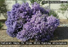Spray directly on the weeds in the morning - let sit all day & overnight! Homemade Weed Spray, Weed Killer Homemade, Spring Allergies, Fertilizer For Plants, Pergola Pictures, Hydrangea Garden, Lawn Care, Gardening Tips, Planting Flowers