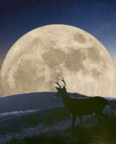 JOIN OUR FULL MOON CEREMONY TOMORROW NIGHT AT 18.00 - 20.15 BST TO CELEBRATE THE BUCK FULL MOON  ✨🌕✨ Moon Child, Full Moon, Join, Celestial, Night
