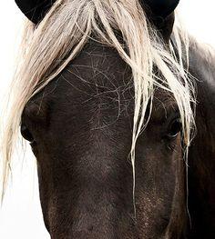 So beautiful Most Beautiful Animals, Beautiful Horses, Beautiful Creatures, Majestic Horse, Horse Girl, Horse Love, Wild Horses, Rare Horses, Black Horses