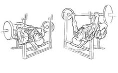 Decline Barbell Bench Press | http://mygymlife.com/how-to-perform/decline-barbell-bench-press