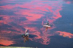 Celebrating the cranberry harvest | Mass Great Outdoors Blog
