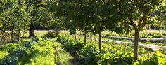 la ferme Permaculture, Beaux Villages, Farming, Homesteading, Vineyard, Gardening, Outdoor, Veggie Gardens, The Visitors