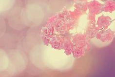 (floral,pretty,pink,vintage,pastel)