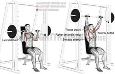 Smith machine seated overhead press. A compound exercise. Target muscle: Anterior Deltoid. Synergists: Lateral Deltoid, Clavicular (Upper) Pectoralis Major, Triceps Brachii, Middle and Lower Trapezius, and Serratus Anterior.