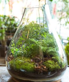 Today we look at ways to make your very own unforgettable bonsai terrarium plants. The picture Bonsai Terrarium plant here offers you a sense of the scale, and we're sure you want to have it for your home decor. Terrarium Diy, Orchid Terrarium, Terrarium Containers, Container Gardening, Gardening Tips, Urban Gardening, Organic Gardening, Indoor Gardening, Gardening Services