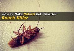 Best Natural Roach Killer