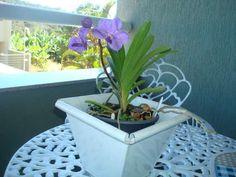 As orquídeas têm a reputação de serem plantas tenras e temperamentais, mas isso nem sempre é verdade. Muitos tipos de orquídeas terrestres são tão fáceis de cultivar quanto qualquer outra planta. #plantar #euamoplantas #plantasemcasa#flores#floresemcasa #floresnojardim
