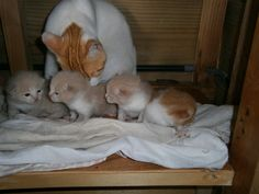 Kitty and her babies,,she gave birth to 2 of them on my bed,Max was asleep on the bed..Once he woke up Kitty went into a corner and had 2 more babies..