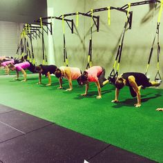 Moving with Quality is the Foundation of Better #TRX #body #abs #core #pilates #health #upperbody #fitness #fit #fitspo #groupfitness #groupclasses #getfit #active #sweat #workout #goals #fun #instahealth #bodyweight #perthfitness #personaltrainer #exercise #trainhard #community #motivation #inspiration #fitnessjourney #perth #absonfitness