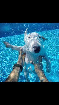 Underwater Bullie❤