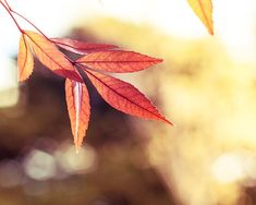 autumn leaves photography fall 8x10 8x12 decor by mylittlepixels