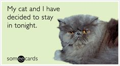 14 Things Every Cat Owner Has Said At One Point #WorldCatDay | Cats | Happy Place