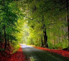 Post with 1094 votes and 2728123 views. Tagged with wallpaper, wallpapers, beautiful, road trip, natural beauty; Shared by A Beautiful Road Nature Hd, Autumn Nature, Nature Images, Nature Pictures, Autumn Leaves, Autumn Fall, Crazy Pictures, Fall Images, Fall Trees