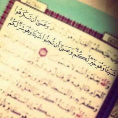 Surah from AlQuran