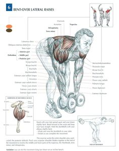 Bent-Over Lateral Raises ♦ muscles bodybuilding shoulders Sport Fitness, Muscle Fitness, Mens Fitness, Health Fitness, Workout Fitness, Biceps, Bent Over Lateral Raises, Fitness Bodybuilding, Muscle Anatomy