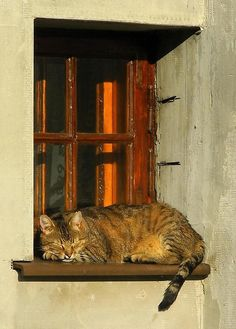 Witch Cottage:  #Witch #Cottage ~ cat on a windowsill.