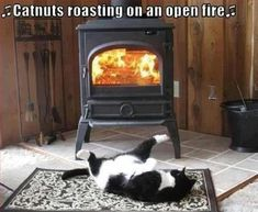 """Catnuts roasting on an open fire..."""