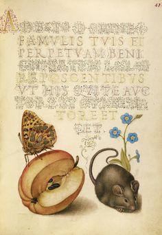 iluminado con ratón, manzana, mariposa y flor no me olvides- Mira
