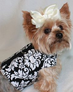 Darling Damask Dog Harness