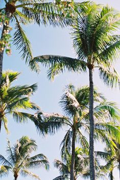 Why Ritz-Carlton Waikiki Beach Should Be Your Destination Wedding Location Maui Weddings, Hawaii Wedding, Top Hotels, Best Hotels, Destination Wedding Locations, Wedding Venues, Waikiki Beach, Wedding Songs, Beautiful Hotels