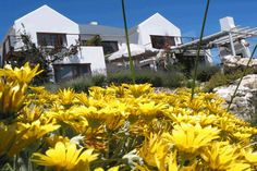 Located only a few minutes from Paternoster, a traditional fishing village on the West Coast of South Africa, this modern guest house impresses with its. Holiday Accommodation, Fishing Villages, Nature Reserve, Stargazing, West Coast, Kayaking, Places To See, South Africa, Beautiful Places