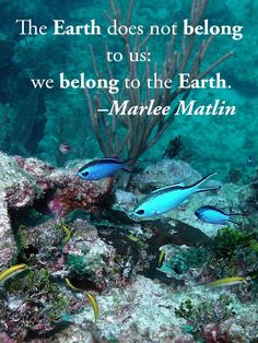 The Earth does not belong to us: we belong to the Earth. –Marlee Matlin  #scuba #diving #quotes #inspirationalquotes