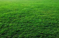 deep-green-grass-texture.jpg (5174×3366)