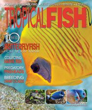 The February 2012 issue of TFH featured articles on predatory tetras, Mexican cichlids, creating a paludarium, maintaining powder blue tangs, and more.