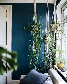 Hängepflanzen bringen Atmosphäre in jede Wohnung! Hanging plants bring atmosphere to every home! Related posts: Embelish any room of your home with this eye catching hanging plant's decor Dark Living Rooms, Home And Living, Living Room Decor, Living Spaces, Dark Rooms, Plants In Living Room, Blue Living Room Walls, Dark Blue Bedroom Walls, Dark Blue Walls