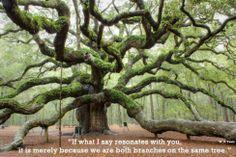 Wan Bon (Een Boom, One Tree)  - Robin Raveles (Dobru)