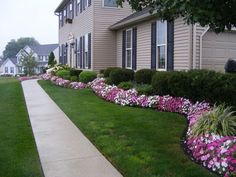 This picture shows the front view of a well manicured foundation planting.  Impatiens are used to edge this bed to colorful effect.