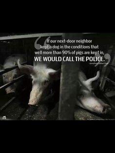Please consider not supporting this cruel industry and going vegan. Gmo Facts, Vegan Facts, Vegan Memes, Vegan Quotes, Mercy For Animals, Why Vegan, Vegan Vegetarian, Factory Farming, Stop Animal Cruelty