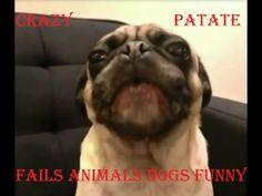 [FAILS ANIMALS] des chien et des chat très drôle CRAZY PATATE