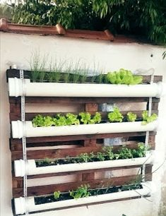Como decorar e organizar sua casa com tubos de PVC - garden design - Gutter Garden, Herb Garden, Vegetable Garden, Garden Crafts, Garden Projects, Pallet Projects, Hanging Herbs, Decoration Plante, Pallets Garden