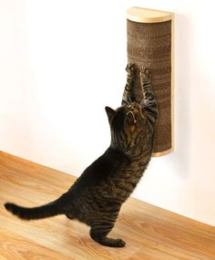Save Space in Style With These Wall-Mounted Cat Scratchers | Catster -- Several options plus a couple of DIYs.