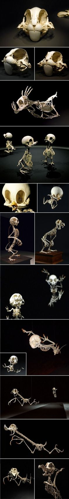 Skeletons of cartoon Characters.  Seriously disturbing.  If you need help figuring them out -  Bugs Bunny, Donald Duck, Huey/Duey/Louie, Tweety,  Pluto, Goofy, Tom and Jerry, Wile E. Coyote and the Road Runner.