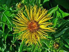 Clay Soil, Perennials, Dandelion, Seeds, Wellness, Winter, Garden, Flowers, Plants