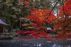 "My favorite season - We enjoy peaceful earth. Japan's beautiful autumn. ;) Many other Autumn photos. ""I Captured Sakura In Autumn Japan"" ↓↓↓↓↓↓↓ http://www.boredpanda.com/winter-cherry-blossoms-and-autumn-leaves/"